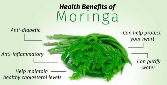 Svelte Pure Moringa Oleifera Benefits