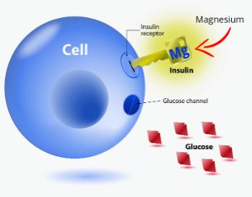 EasyRelief Magnesium Ingredients List