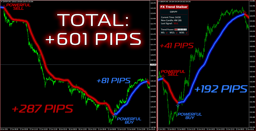 FX Trend Stalker Does It Really Work or Scam