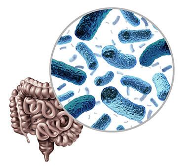 50 Billion Probiotic Review